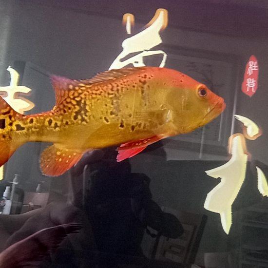 虽然不值钱,但是我喜欢。 天津龙鱼论坛 天津龙鱼第4张