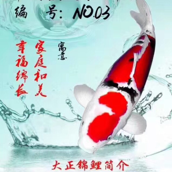 锦鲤与风水[haha][haha][haha] 天津龙鱼论坛 天津龙鱼第4张