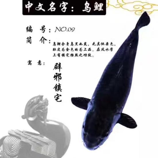 锦鲤与风水[haha][haha][haha] 天津龙鱼论坛 天津龙鱼第5张
