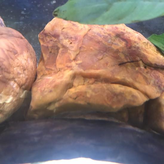 老看鱼,看看鱼缸里石头 天津观赏鱼 天津龙鱼第1张