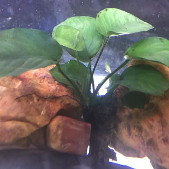 老看鱼,看看鱼缸里石头 天津观赏鱼 天津龙鱼第4张