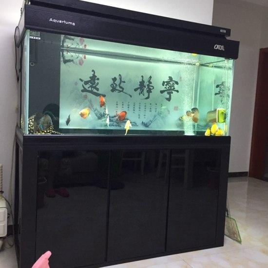 鱼缸里一龙二魟还有十来只七彩,平时喂的也不少,也喂活鱼,拉的多,吃完活鱼缸,底下 天津观赏鱼