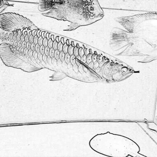 天津鱼缸定制不一样的风格! 天津龙鱼论坛 天津龙鱼第1张
