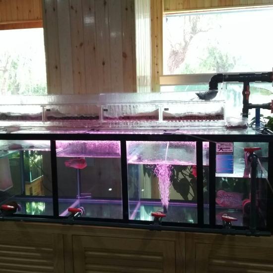 专业养龙、养虹鱼缸,底滤也是很强大的! 天津观赏鱼 天津龙鱼第2张