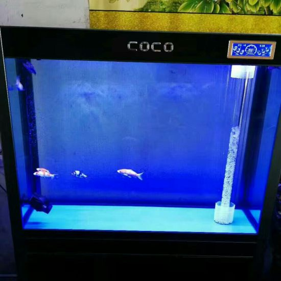 天津哪买的龙鱼好军哥专利带鱼马桶的鱼缸 天津龙鱼论坛 天津龙鱼第2张