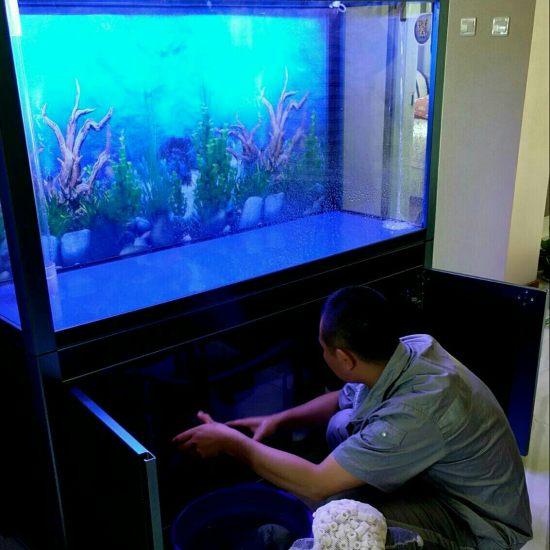 天津哪买的龙鱼好军哥专利带鱼马桶的鱼缸 天津龙鱼论坛 天津龙鱼第5张