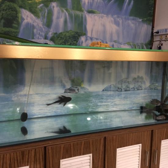 可怜的小龙,什么时候才能进大缸?[cahan] 天津观赏鱼 天津龙鱼第1张