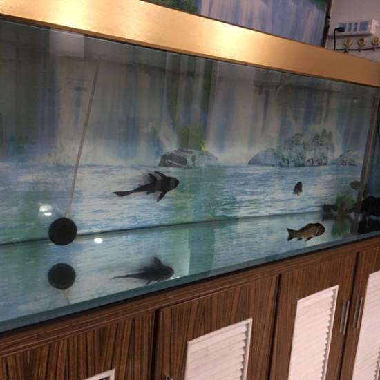 可怜的小龙,什么时候才能进大缸?[cahan] 天津观赏鱼 天津龙鱼第2张