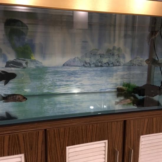 可怜的小龙,什么时候才能进大缸?[cahan] 天津观赏鱼 天津龙鱼第3张