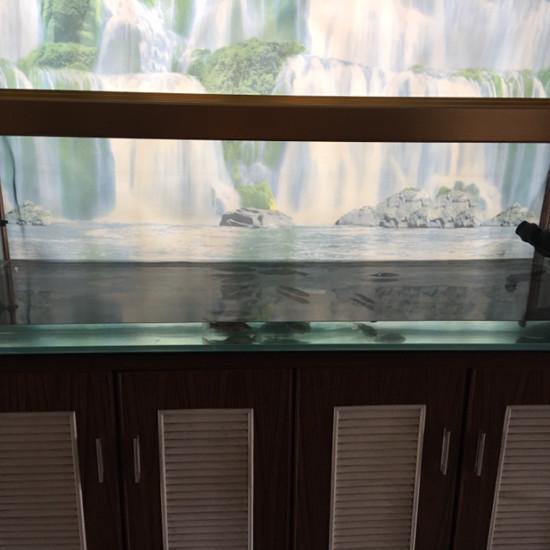 可怜的小龙,什么时候才能进大缸?[cahan] 天津观赏鱼 天津龙鱼第5张