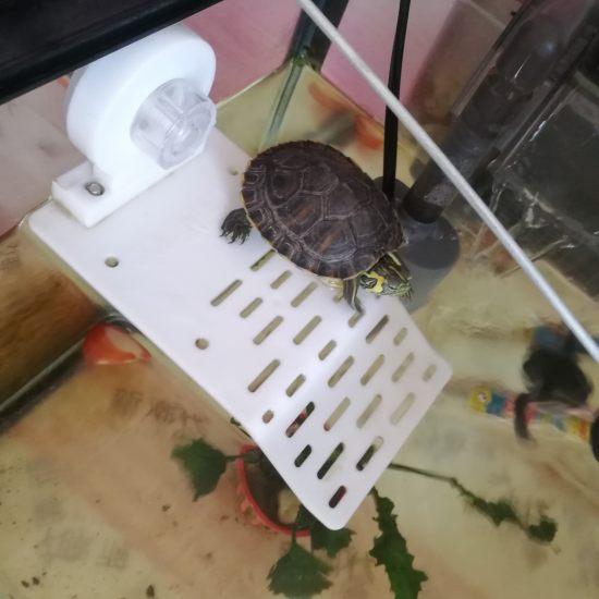 这种乌龟能和罗汉一起天津鱼缸价格养吗 天津观赏鱼