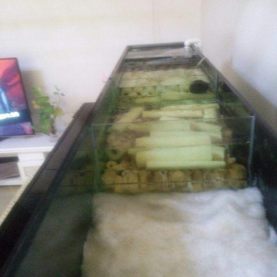 天津中环花鸟鱼市场# 过滤元帅·就选钟爱#做出来的缸不理想,上滤第一隔找不到好的 天津观赏鱼 天津龙鱼第1张