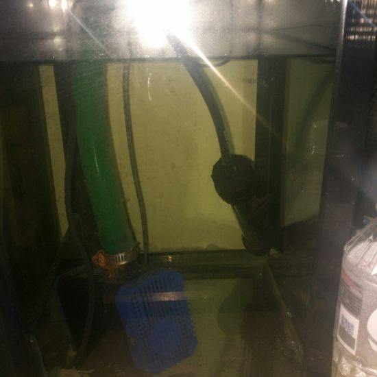 # 过滤元帅·就选钟爱#我的过滤集合了沉淀仓。干湿分离。魔球细菌屋。还有杀菌灯。 天津龙鱼论坛 天津龙鱼第5张