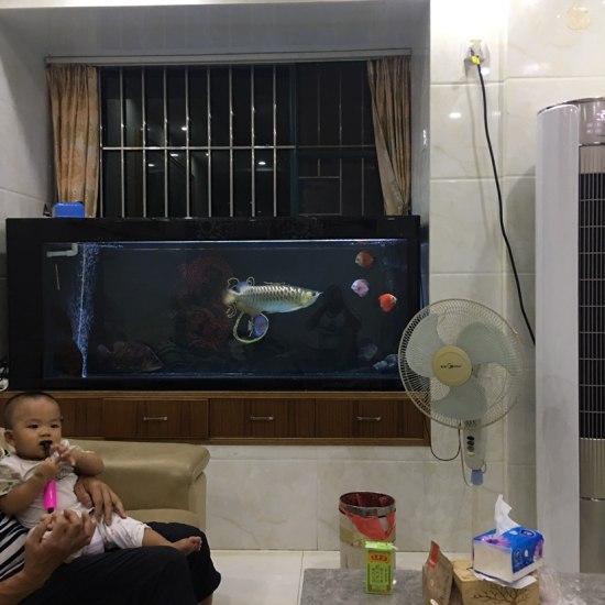儿子向鱼友们问好[haha] 天津龙鱼论坛 天津龙鱼第2张