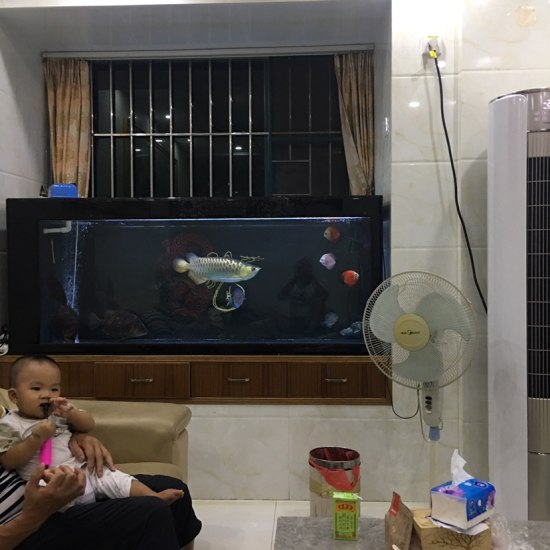 儿子向鱼友们问好[haha] 天津龙鱼论坛 天津龙鱼第3张
