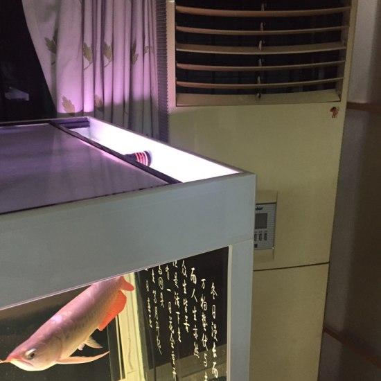 夏天不怕直接上空调.水温保持在28.哈哈哈 天津观赏鱼 天津龙鱼第2张