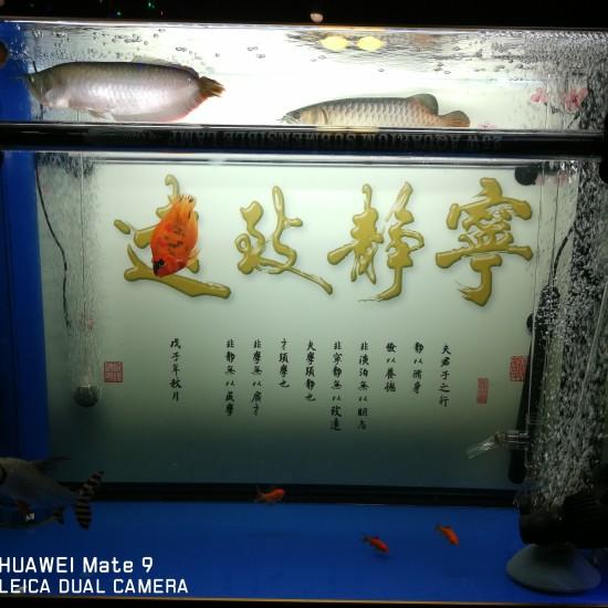 NEC配合865的效果[ciya][ciya][ciya] 天津龙鱼论坛 天津龙鱼第1张