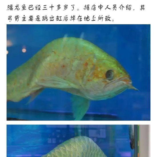 #龙鱼#看着?渐渐的老去,鱼友们,你们有何感想[pizui][pizui] 天津观赏鱼 天津龙鱼第7张