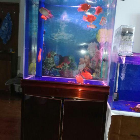 鱼友们大家早晨好:请欣赏一下我的爱鱼喽! 天津观赏鱼 天津龙鱼第1张