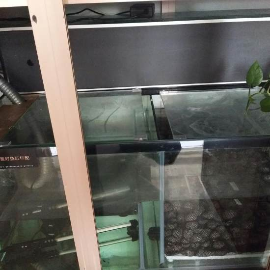 #过滤元帅·就选钟爱#大缸用的是原缸的过滤系统,滴流加干湿分离,系统是够强大可惜 天津观赏鱼 天津龙鱼第3张