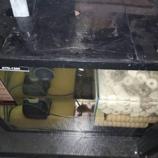 #过滤元帅·就选钟爱#大缸用的是原缸的过滤系统,滴流加干湿分离,系统是够强大可惜 天津观赏鱼 天津龙鱼第6张