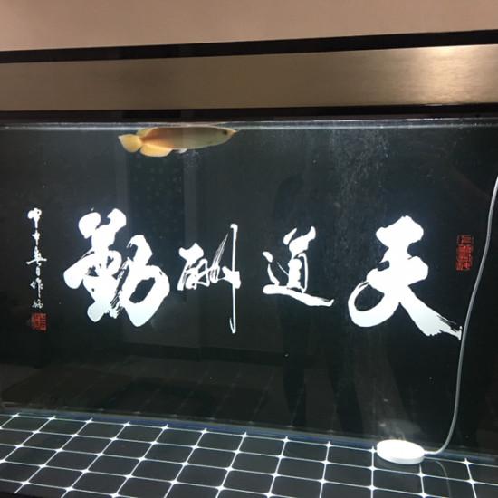 温州水族2017年,8月22日,极品小孟到家,纪念一下,哈哈哈 温州水族批发市场 温州龙鱼第3张