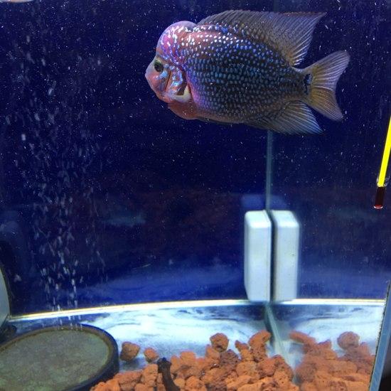 今天继续晒你了 温州水族批发市场 温州龙鱼第1张