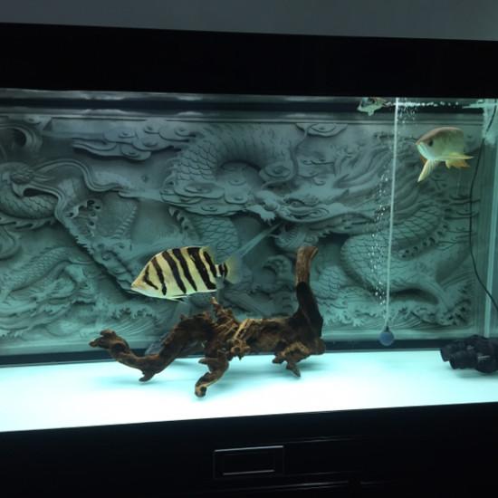 卸下背景集体明了[bishi] 温州龙鱼论坛 温州龙鱼第1张