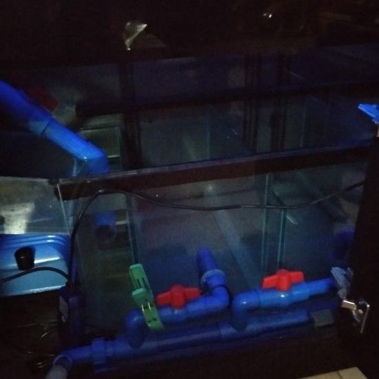 换水,加滤材,重新布置过滤槽,期待更好的水质! 太原观赏鱼 太原龙鱼第1张