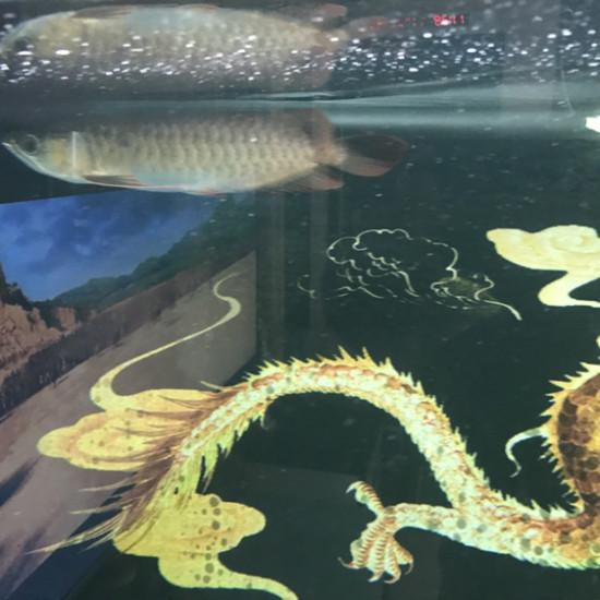 看看有点颜色了吗 太原龙鱼论坛 太原龙鱼第2张