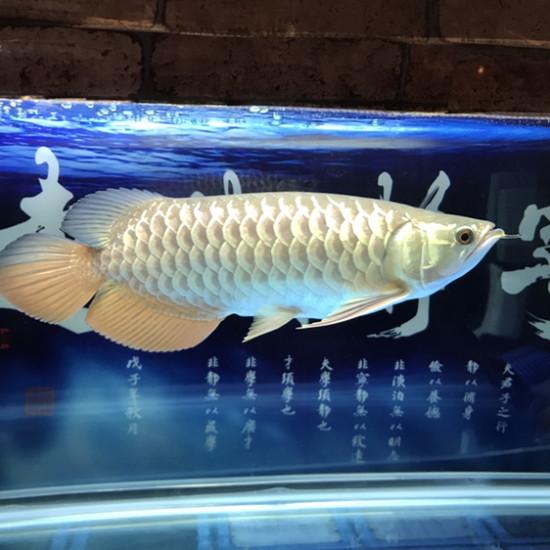 变化#龙鱼# 温州龙鱼论坛 温州龙鱼第2张