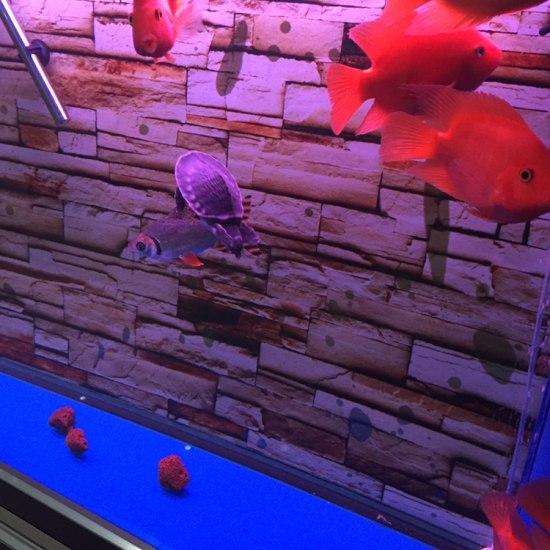 水还可以吧?#水# 温州龙鱼论坛 温州龙鱼第2张