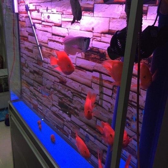 水还可以吧?#水# 温州龙鱼论坛 温州龙鱼第4张
