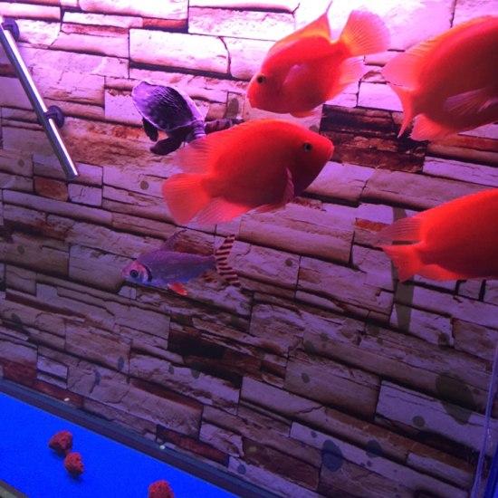 水还可以吧?#水# 温州龙鱼论坛 温州龙鱼第3张