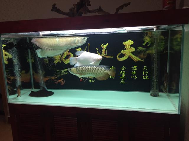 祝大家栖息节快乐 温州龙鱼论坛 温州龙鱼第2张