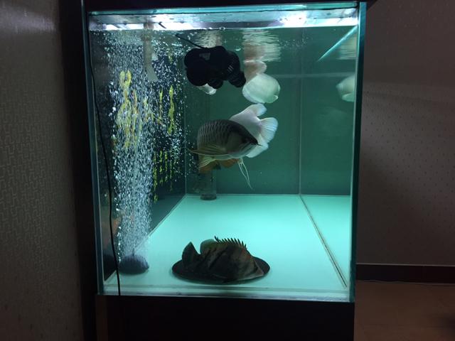 祝大家栖息节快乐 温州龙鱼论坛 温州龙鱼第4张