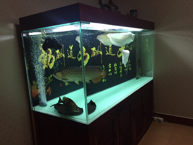 祝大家栖息节快乐 温州龙鱼论坛 温州龙鱼第3张