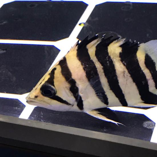 好丑啊[lenghan][lenghan] 温州龙鱼论坛 温州龙鱼第3张