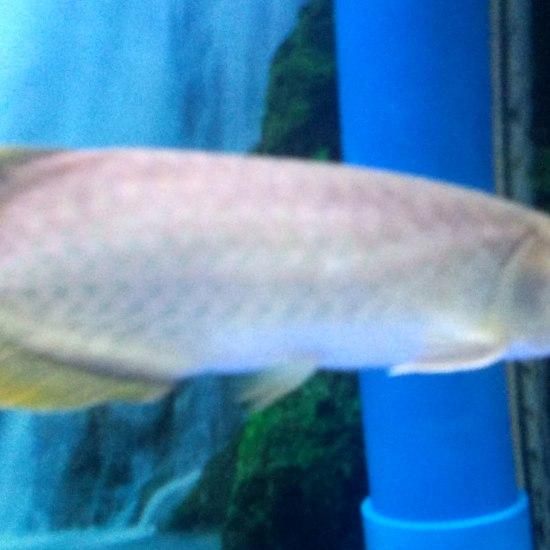 这个鱼怎么样呢?怎么最近老不是食呢?