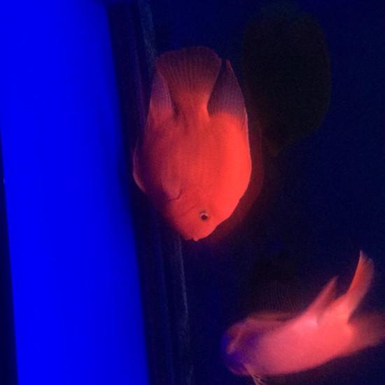 南通大型观赏鱼缸#钟爱魔毯·试用报告#发货比较慢 刚收到用了不长时间,不过说真的 南通水族资讯 南通水族批发市场第2张