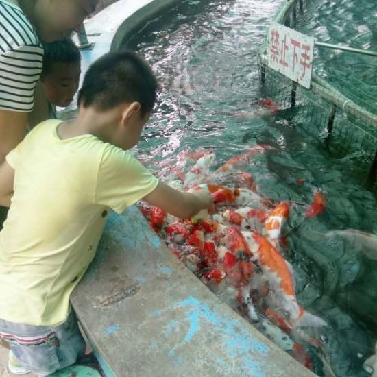 龙~鱼~ 太原观赏鱼 太原龙鱼第2张