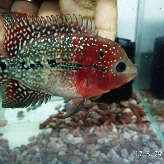 鱼友们都加加好友讨论讨论养鱼之乐 温州龙鱼论坛 温州龙鱼第3张
