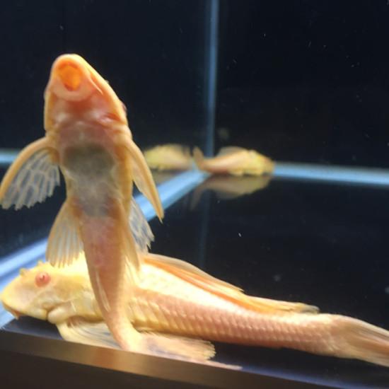你们的潜水灯藏鱼食吗?[lenghan]好烦,有解决方法吗?