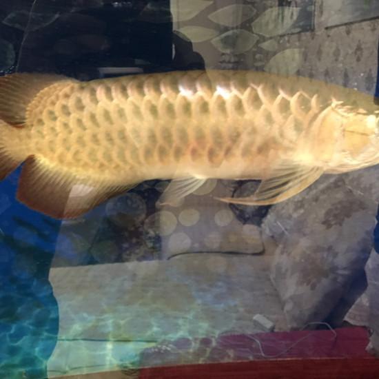 朋友的鱼要出 这能值多少 两张自然光 后两张普通灯管 缸好久没插了南充水族馆 南充观赏鱼 南充水族批发市场第1张