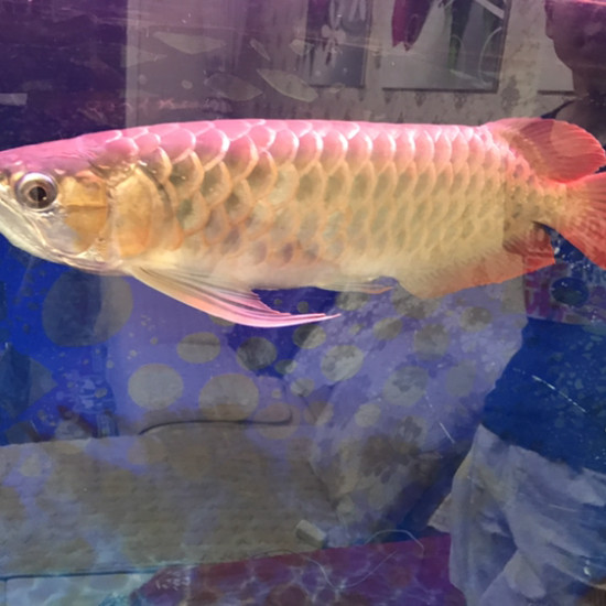 朋友的鱼要出 这能值多少 两张自然光 后两张普通灯管 缸好久没插了南充水族馆 南充观赏鱼 南充水族批发市场第4张