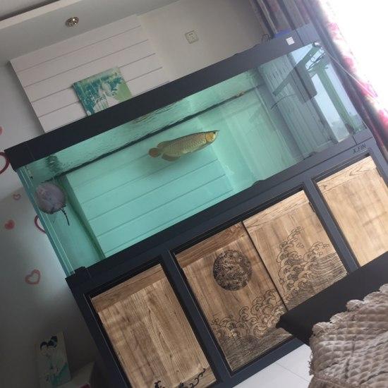有鱼友上岸出泰虎的嘛? 绵阳龙鱼论坛