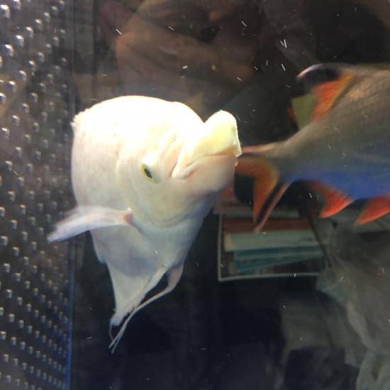 喂了龙鱼,喂招财[ciya] 南京水族批发市场 南京龙鱼第2张