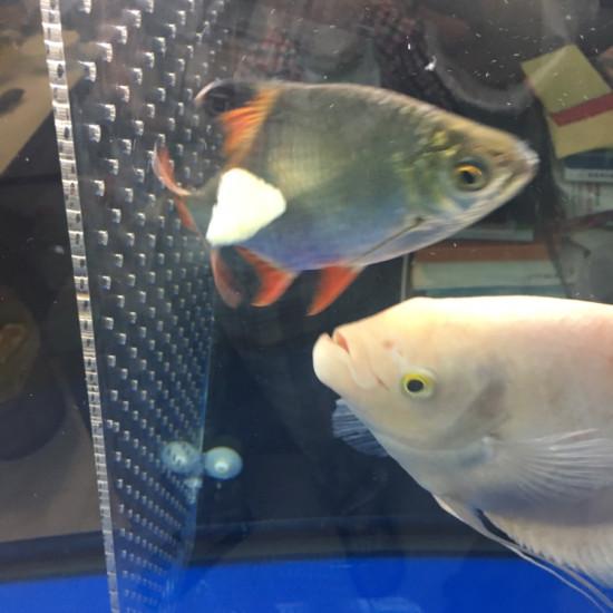 喂了龙鱼,喂招财[ciya] 南京水族批发市场 南京龙鱼第5张