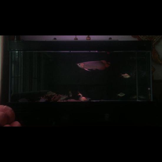 一章绵阳鱼缸六 绵阳龙鱼论坛