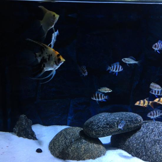 南京鱼缸定做定制加了个螺,希望能撑几天 南京龙鱼论坛 南京龙鱼第1张